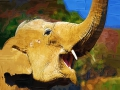 イラスト象