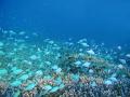 熱帯魚サンゴ礁