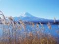 すすきと富士山
