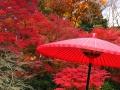 紅葉・傘2