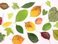葉っぱいっぱい