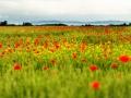 セルビアの草原