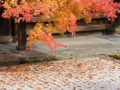 天授庵本堂前庭の紅葉