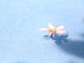 リゾート花